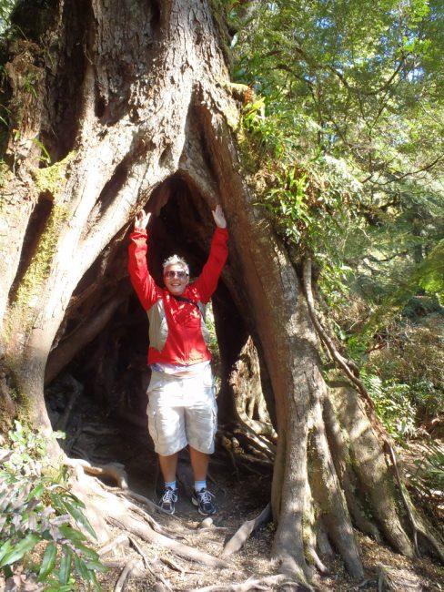 Maits Rest Rainforest Walk - Great Otway National Park, along the Great Ocean Road