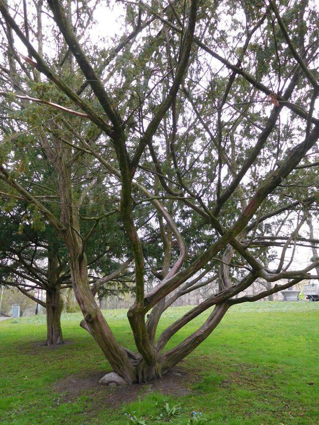 Trippy trees in the Tradgardsforeningen