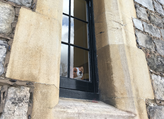 How much is that corgi in the window?
